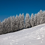"Winter Wonderland II, Zugerberg • <a style=""font-size:0.8em;"" href=""http://www.flickr.com/photos/7223507@N07/8210760509/"" target=""_blank"">View on Flickr</a>"