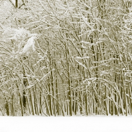 """Little Winter Forest • <a style=""""font-size:0.8em;"""" href=""""http://www.flickr.com/photos/7223507@N07/8210760241/"""" target=""""_blank"""">View on Flickr</a>"""