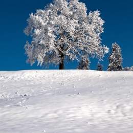 "Winter Wonderland III, Zugerberg • <a style=""font-size:0.8em;"" href=""http://www.flickr.com/photos/7223507@N07/8210759801/"" target=""_blank"">View on Flickr</a>"
