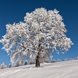 "Winter Wonderland I, Zugerberg • <a style=""font-size:0.8em;"" href=""http://www.flickr.com/photos/7223507@N07/8211850094/"" target=""_blank"">View on Flickr</a>"